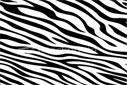 SolidWorks - Zebra Çizgileri